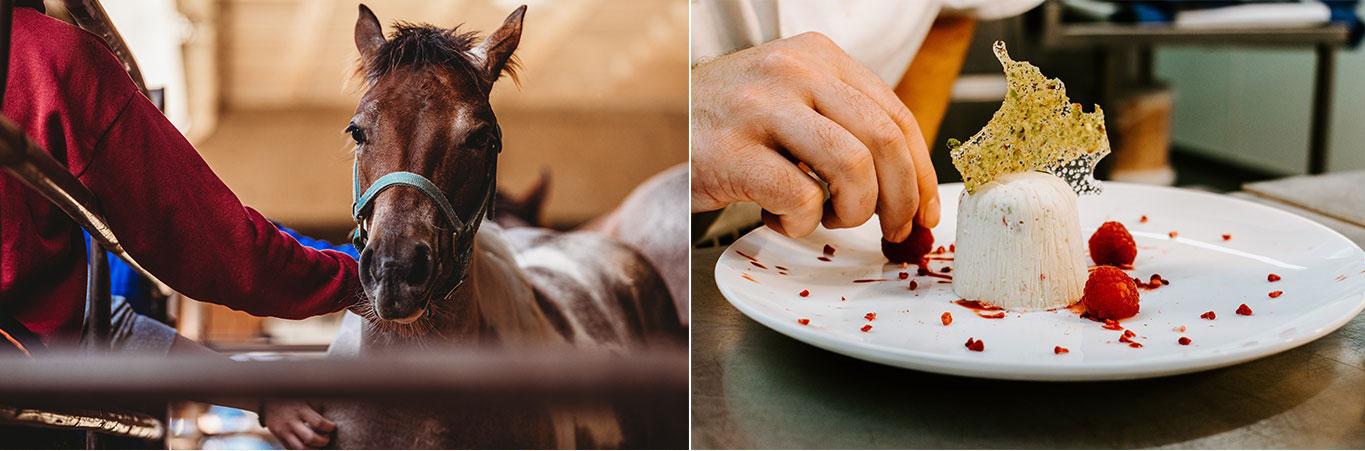 Collage showcasing a horse and someone plating a dessert